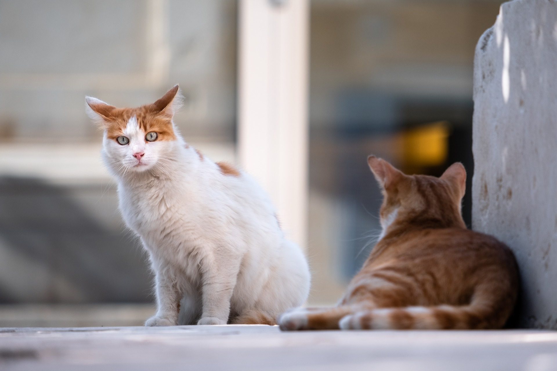 Katten zijn lobbyisten